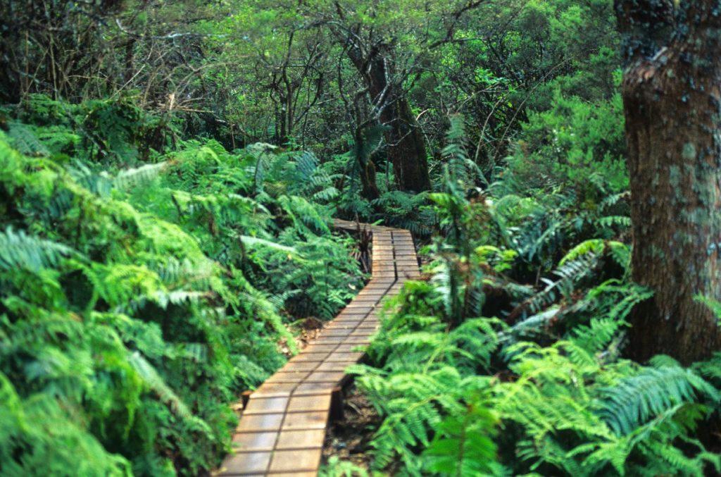 Big Bog, Maui, Hawaii
