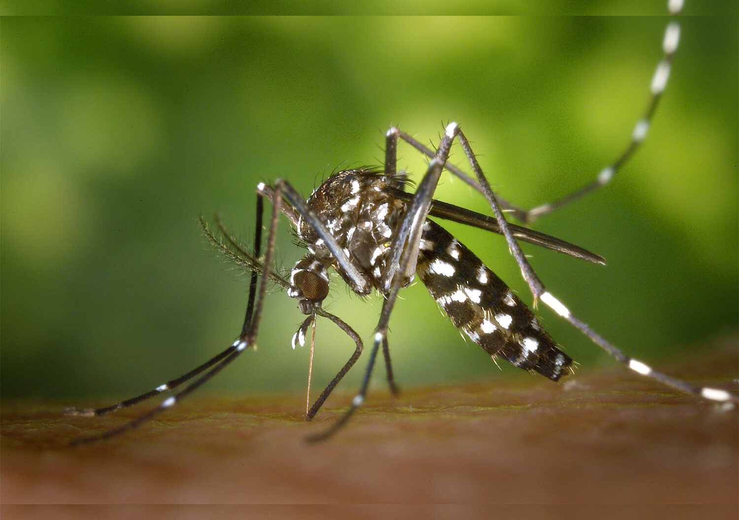 Best Foods to Recover From Dengue Fever - Bold Outline